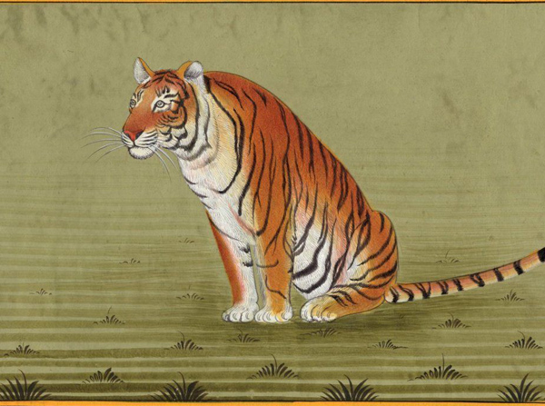 The Cow and a hungry tiger